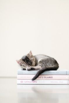 Cyoot Kitteh of teh Day: Reading is Exhausting -- Cheezburger.com