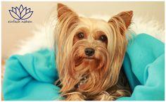 Kuschelsack für Hunde selber Nähen