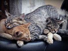 Sleeping Buddies!