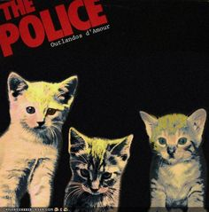 Kittens Take Over Classic Rock Album Covers Famous Album Covers, Worst Album Covers, Rock Album Covers, Classic Album Covers, I Love Cats, Crazy Cats, Cute Cats, Funny Animal Videos, Funny Animal Pictures