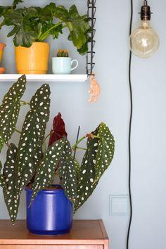 Felblauwe bloempot - Enter My Attic Plant Aesthetic, Trees To Plant, Attic, Indoor Plants, Greenery, Philosophy, Planter Pots, Decoration, Interior