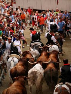 La Entrada de Toros y Caballos de Segorbe clasificada en la segunda fase de #LaMejorFiestadeEspaña