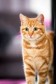 This ginger boy reminds me of my Freddie :)