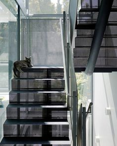 Lovely open stairs..... the cat likes it too!