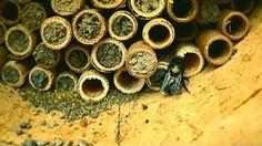 mason bee house - YouTube