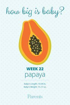 Your+baby+is+the+size+of+a+papaya.+Her+lungs+are+developing+rapidly,+and+they+will+begin+making+a+protein+called+surfactant,+which+will+help+her+breathe+independently+once+she's+born.