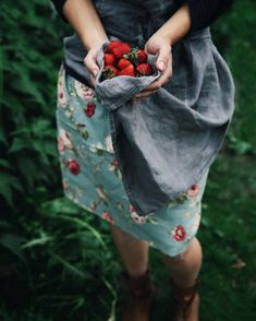 Gathering strawberries from the garden in your apron - food photography with hands