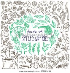 Set Of Various Doodles, Hand Drawn Rough Simple Sketches Of Various Types Of Spices And Herbs. Vector Freehand Illustration Isolated On White Background. - 257767456 : Shutterstock