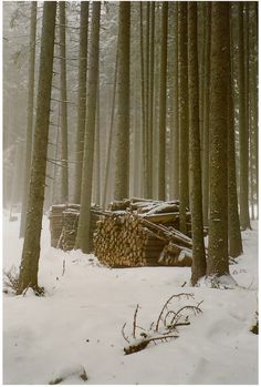 baby it 39 s cold outside on pinterest white christmas snow forest
