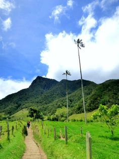 Towering wax palms dot the lush hills on the famous Valle de Cocora hike in Salento. Travel Guides, Travel Tips, South America, Lush, Paths, Transportation, Hiking, Country Roads, In This Moment