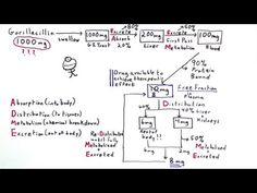 Pharmacokinetics: How Your Body Handles Drugs – One Minute Medical School – wanderlust Rn School, Pharmacy School, Medical School, Drug Cards, Psych Nurse, How To Get Better, Nursing Tips, Nclex, Pharmacology