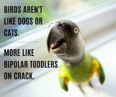 From parrot humour page Facebook. Certainly true of Teddy my Seny