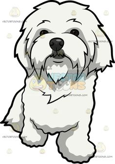 A Curiously Cute Maltese Dog : A dog with long white coat and droopy ears looking quiet and so cute The post A Curiously Cute Maltese Dog appeared first on VectorToons.com.
