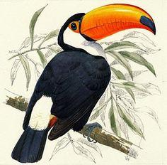Toco Toucan - Painting Art by Eriko Kobayashi natureartists.com