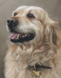 Mary Herbert is an artist based in Ceredigion, West Wales specialising in pastel portraits of horses and dogs. Commissions welcome, original artwork for sale, tuition available Animal Paintings, Animal Drawings, Art Drawings, Pastel Portraits, Dog Portraits, Golden Retriever Art, Dog Artist, Art Courses, Color Pencil Art