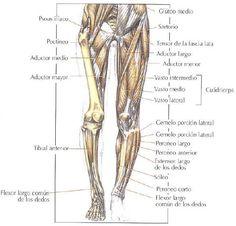 Resultado de imagen para anatomia y fisiologia  piernas