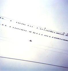 Birds #polaroid #powerline