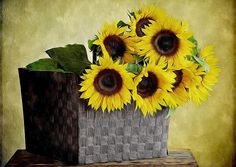 Bouquet From Sunflowers In Basket On The Table Still Life Pictures, Pretty Pictures, Mobile Wallpaper, Wallpaper Backgrounds, Sunflower Photography, Clark Art, Sunflower Wallpaper, High Resolution Wallpapers, Stunning Photography