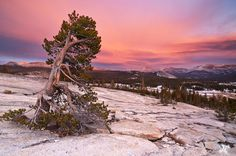 Toulome Meadows Yosemite