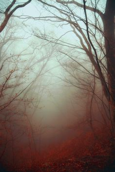 ~~A fairy tale's beginning | a path into a misty forest | by Hanson Mao~~