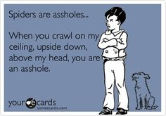 Funny Confession Ecard: Spiders are assholes... When you crawl on my ceiling, upside down, above my head, you are an asshole.