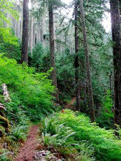 Tie Trail Loop - Mary's Peak Philomath, OR 6.3 miles