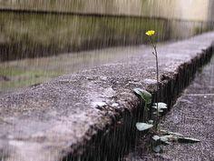 Il pleure dans mon coeur comme il pleut sur la ville;quelle est cette langueur que pénètre mon coeur ?? Ô bruit deux de la pluie ……………..Paul Verlaine