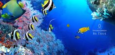 Gliding through the #blue waters, we get to see these blue corals. Have you experienced this?