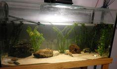 All About Axolotls: Axolotl Care
