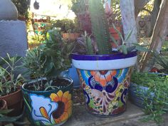 Talavera pots with assorted succulents-African Milk Weed- Delmas, Angel tears-Kay, begonia