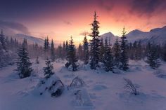"""Arctic Frontier - """"Arctic Frontier"""" - Lyngen Alps - Norway  While we had to suffer the storm we still had fun taking photos in the woods. What you might imagine as fog is snow which has been blown from the trees. A really memorable evening.  Prints and licensing available.  <a href=""""https://www.facebook.com/StefanHefelePhotography"""">Facebook Fan Site</a>  <a href=""""http://www.stefan-hefele.de/en/news.html"""">www.stefan-hefele.de</a>"""
