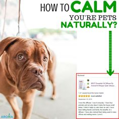 Exciting review! Click on the image to see the full review and how did she calm her pets naturally
