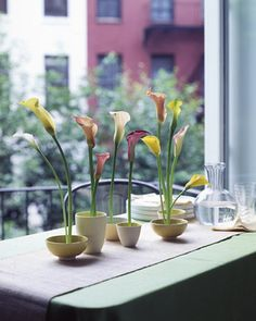 Calla Lily Arrangement  This flower's stem has the graceful posture of a ballerina. Instead of hiding such elegant stalks inside tall vases, show them off in a variety of bowls.