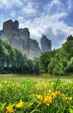 Central Park in Spring: The best things in life are free (like a walk in the park)... but those apartments will cost you!