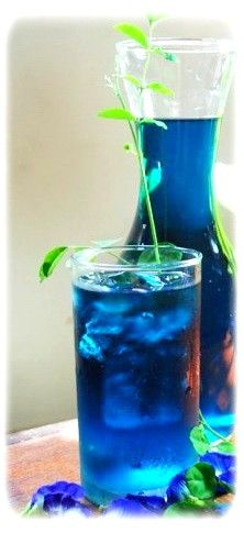 BlueChai Dried Butterfly Blue Pea Tea - photo BlueChaiTea-DriedButterflyPeaFlowers-BlueTeaFlower141_zps8387febc.jpg