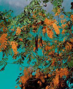 Goldtree : Brendan George Ko: A Stranger In Two Worlds