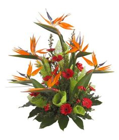 red ginger bird of paradise tropical arrangement   Bird Of Paradise Flower Arrangements Birds of paradise flowers