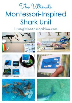 This roundup has lots of free Montessori-inspired shark printables