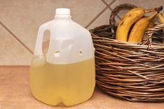 Homemade House Fly Traps 1/4C syrup 1/4C apple cider vinegar. Big holes in jug or bottle. Flys in not out