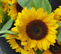SUNFLOWER Flower stand at Lexington Avenue and 96th Street, New York City.