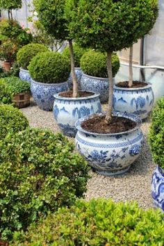 Never enough boxwoods or blue and white planters - particularly together. Never enough boxwoods or blue and white planters - particularly together. White Planters, Blue And White China, Blue China, Chinoiserie Chic, White Gardens, White Decor, Dream Garden, Garden Pots, Herb Garden