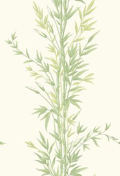 Bamboo  Green and Off White wallpaper by Cole & Son
