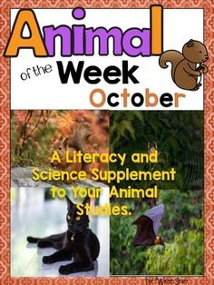 Fun activities for your 1st and 2nd grade learners to supplement your Fall units: learn about cats, spiders, bats and squirrels.