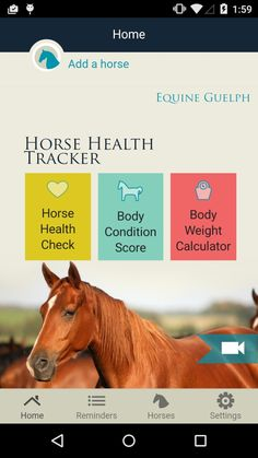 Carefree Enzymes 94089 Bit Wipes Horse Health /& Care