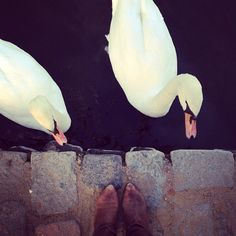 #fromwhereistand with fine feathered friends by bexfinch http://instagr.am/p/SgKyjlCb68/