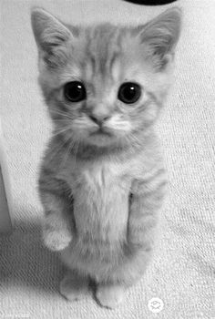 Top 10 Cutest Cat Collection | World of Pets | Pinterest | Cats ...