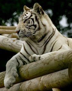 Nature Board: Amazing Wildlife Photos