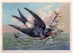 Vintage Graphic - Beautiful Swallow Bird at Sea - The Graphics Fairy