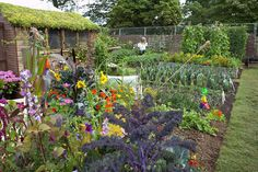 Learn how to manage your allotment; find out about crop rotation, intercropping, how to manage watering, weeding and plenty more allotment ideas from the RHS Allotment Plan, Allotment Design, Allotment Gardening, Organic Gardening, Gardening Tips, Vegetable Gardening, Veg Garden, Edible Garden, Garden Water
