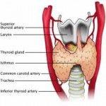 Herbal Remedies for Hypothyroidism